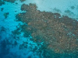 Australia's Great Barrier Reef Loses More Than 50% of Its Corals to Climate Change