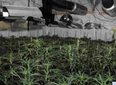 Illegal Cannabis Growers Grow Marijuana in the Center of London's Financial District