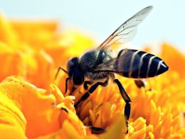 Pesticides are Robbing Bees of a Good Night's Sleep, New Studies Find